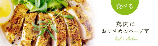 鶏肉料理におすすめの苗
