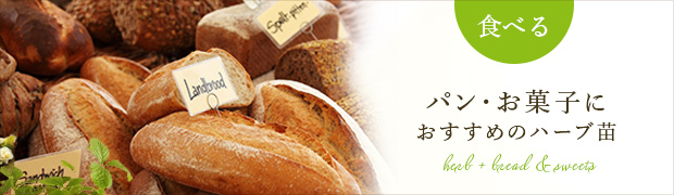 パン・お菓子におすすめの苗