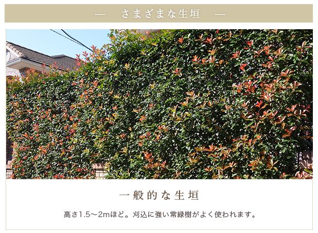 さまざまな生垣・一般的な生垣:高さ1.5〜2mほど。刈込に強い常緑樹がよく使われます。