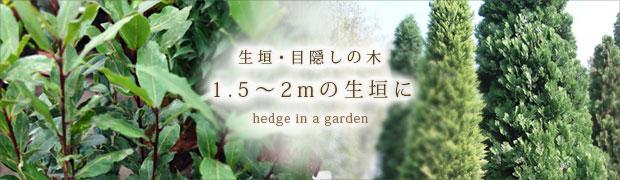 生垣・目隠しの木:1.5〜2mの生垣に