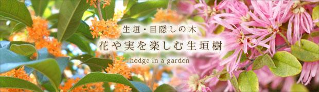 生垣・目隠しの木:花や実を楽しむ生垣樹