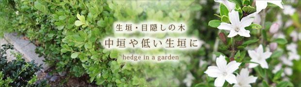 生垣・目隠しの木:中垣や低い生垣に