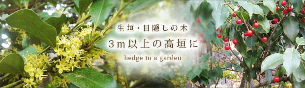 生垣・目隠しの木:3m以上の高垣に!