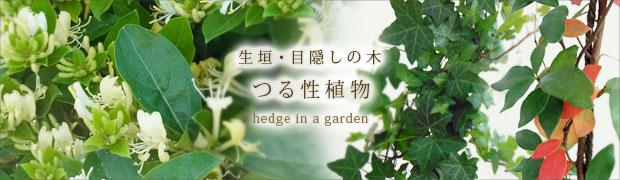 """生垣・目隠しの木:つる性植物"""""""