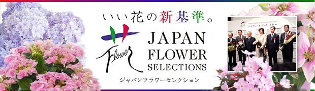 ブランド:苗 JFS(ジャパンフラワーセレクション)