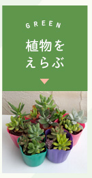 植物を選ぶ