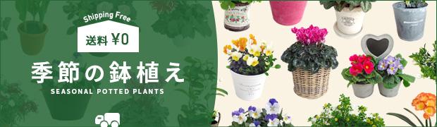 送料無料商品:季節の鉢植え