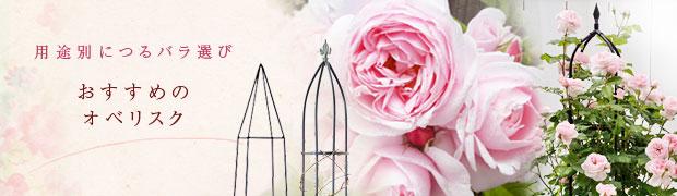 用途別につるバラ選び:おすすめのオベリスク