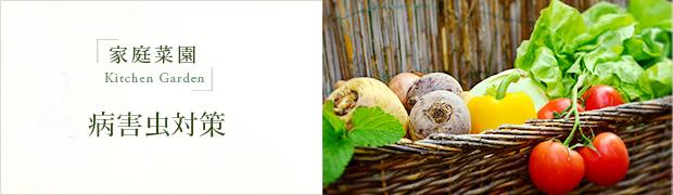 家庭菜園:病害虫対策