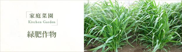 家庭菜園:緑肥作物
