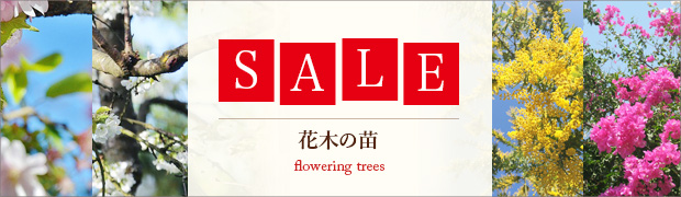 セール:花木の苗