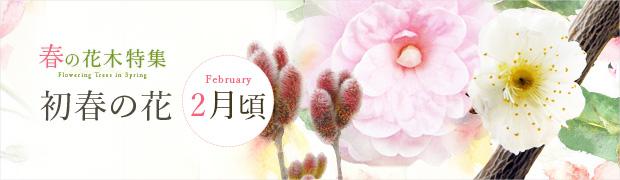 春の花木特集:初春の花(2月頃)