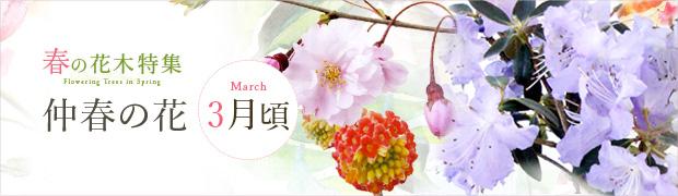 春の花木特集:仲春の花(3月頃)