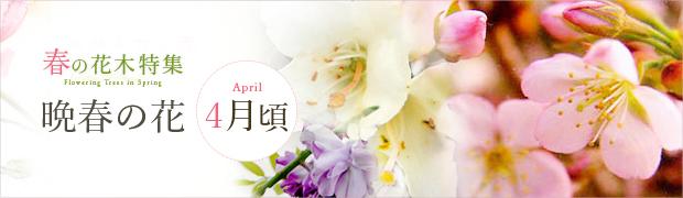 春の花木特集:晩春の花(4月頃)
