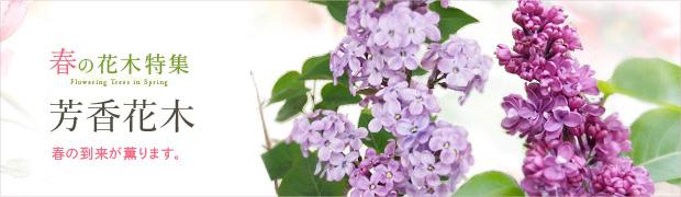 春の花木特集:芳香花木