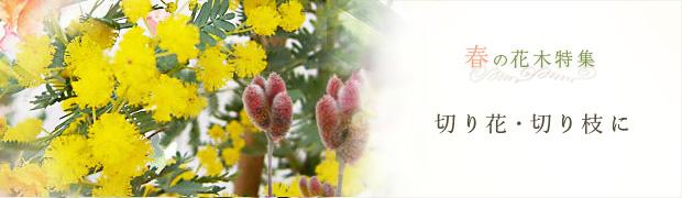 春の花木特集:切り花・切り枝に
