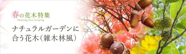 春の花木特集:ナチュラルガーデンに合う花木(雑木林風)