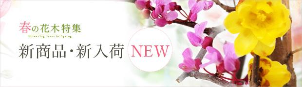 春の花木特集:新商品・新入荷