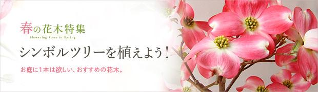 春の花木特集:シンボルツリーを植えよう!