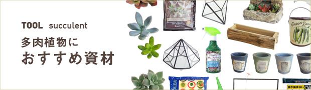 観葉植物特集:多肉植物におすすめ資材