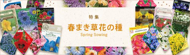 春おすすめの種