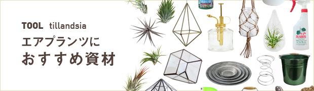観葉植物特集:エアプランツにおすすめ資材