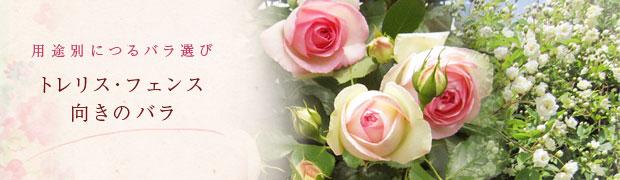 用途別につるバラ選び:トレリス・フェンス向きのバラ