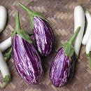 [春まき ジューシーでおいしい紫茄子 縞模様がきれい 野菜タネ]ナス:アレキサンドラの種