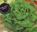 [野菜タネ]レタス:バターレタスの種