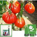 [17年4月中旬予約]トマトのかんたん栽培セット:ズッカ3号ポット