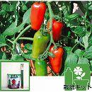 [17年4月中旬予約]トマトのかんたん栽培セット:ルンゴ3号ポット