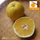 かわちばんかん(河内晩柑)4.5号ポット