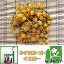 トマトのかんたん栽培セット:マイクロトマト・イエロー