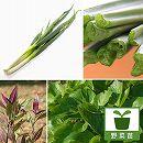 おためし4種12株セット:おすすめ葉もの野菜苗*