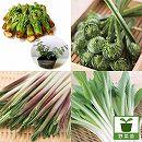 おいしい山菜苗4種12株セット