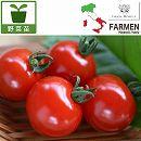 [17年4月中旬予約]生食用イタリアントマト無農薬シリーズ:イタリアンレッド3.5号ポット 24株セット