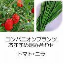 コンパニオンプランツ栽培セット:トマト(プラム):アイコと大葉ニラ