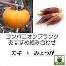 コンパニオンプランツ栽培セット:柿(カキ):富有とみょうが苗のセット