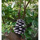Fallen Fruits:バードフィーダー パインコーン(FB176)