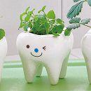 トゥースグリーン:ミント(種から育てる栽培セット)