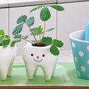 トゥースグリーン:ワイルドストロベリー(種から育てる栽培セット)
