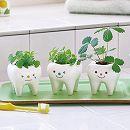 トゥースグリーン:種から育てるハーブの栽培キット3種セット
