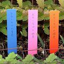 ゴールドカラーラベル1.2×9cm 3色(青・桃・橙)300枚