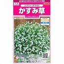[サカタ 花タネ]かすみ草:ジプシーホワイトの種