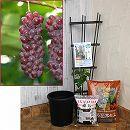 ホームフルーツの鉢栽培セット:ブドウ:デラウエア