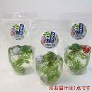 [17年5月中旬予約]水生植物:ガラス玉入りメダカ産卵水草1パック