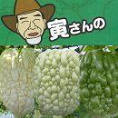 寅さんのアップルゴーヤ3号ポット3種セット(白秀・青秀・緑秀)