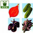 [17年4月中旬予約]加賀野菜3.5号ポット4種セット