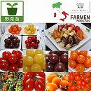 [17年4月中旬予約]生食用イタリアントマト無農薬シリーズ3.5号ポット7種7株セット