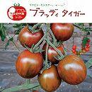[17年4月中旬予約]イタリアントマト:ブラッディタイガー3号ポット 6株セット
